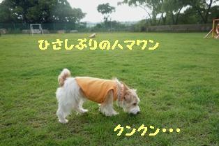 b0137280_13361159.jpg