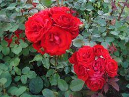 ロミオとジュリエット_a0102784_7422624.jpg