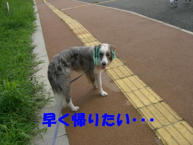 b0137913_0454855.jpg