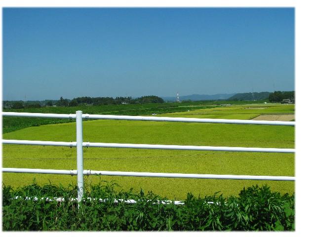 田園風景_a0004023_23215738.jpg