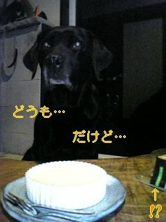 感謝の日_f0148927_1951216.jpg