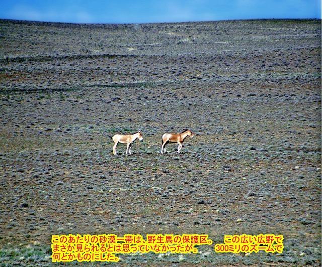 中国② ジュンガル盆地_e0108650_11215892.jpg