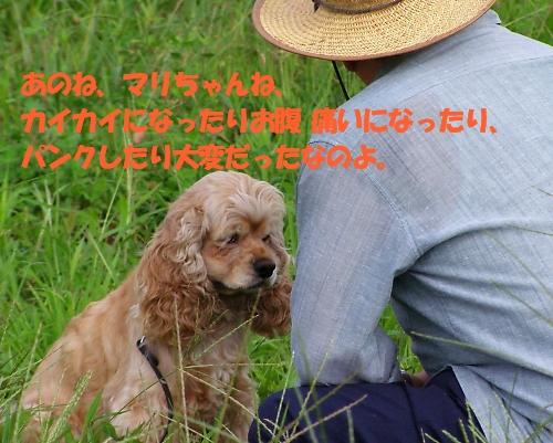 b0067012_8175453.jpg