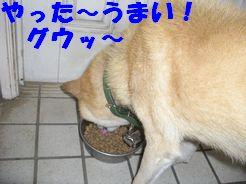 b0085815_9103181.jpg