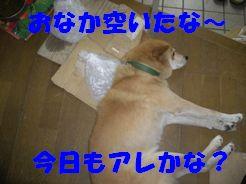 b0085815_994152.jpg