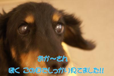 b0127926_1314241.jpg