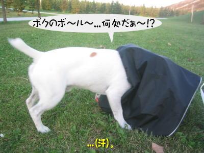 b0105157_20131796.jpg