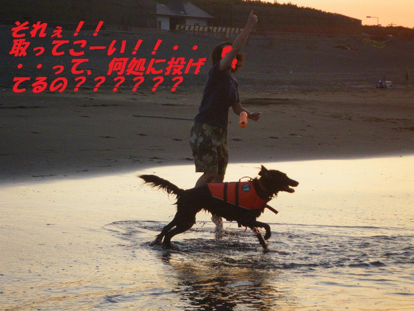 a0104464_11194363.jpg