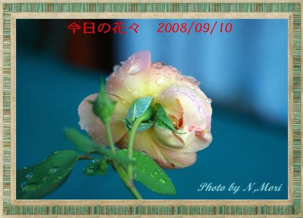 b0115085_701780.jpg