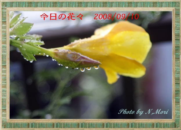 b0115085_70354.jpg