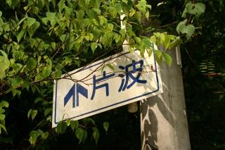 片波川源流 伏条台杉群_d0055236_19485241.jpg