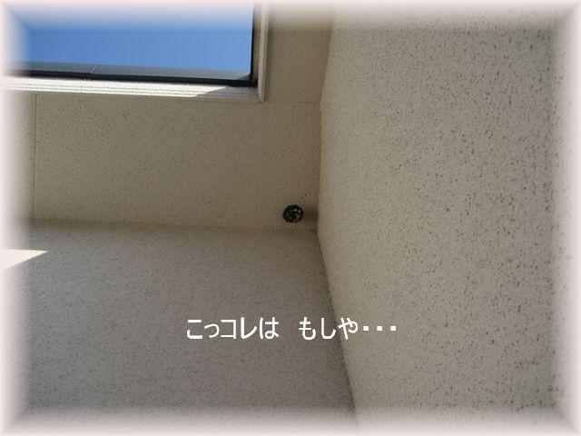 e0127409_1623293.jpg