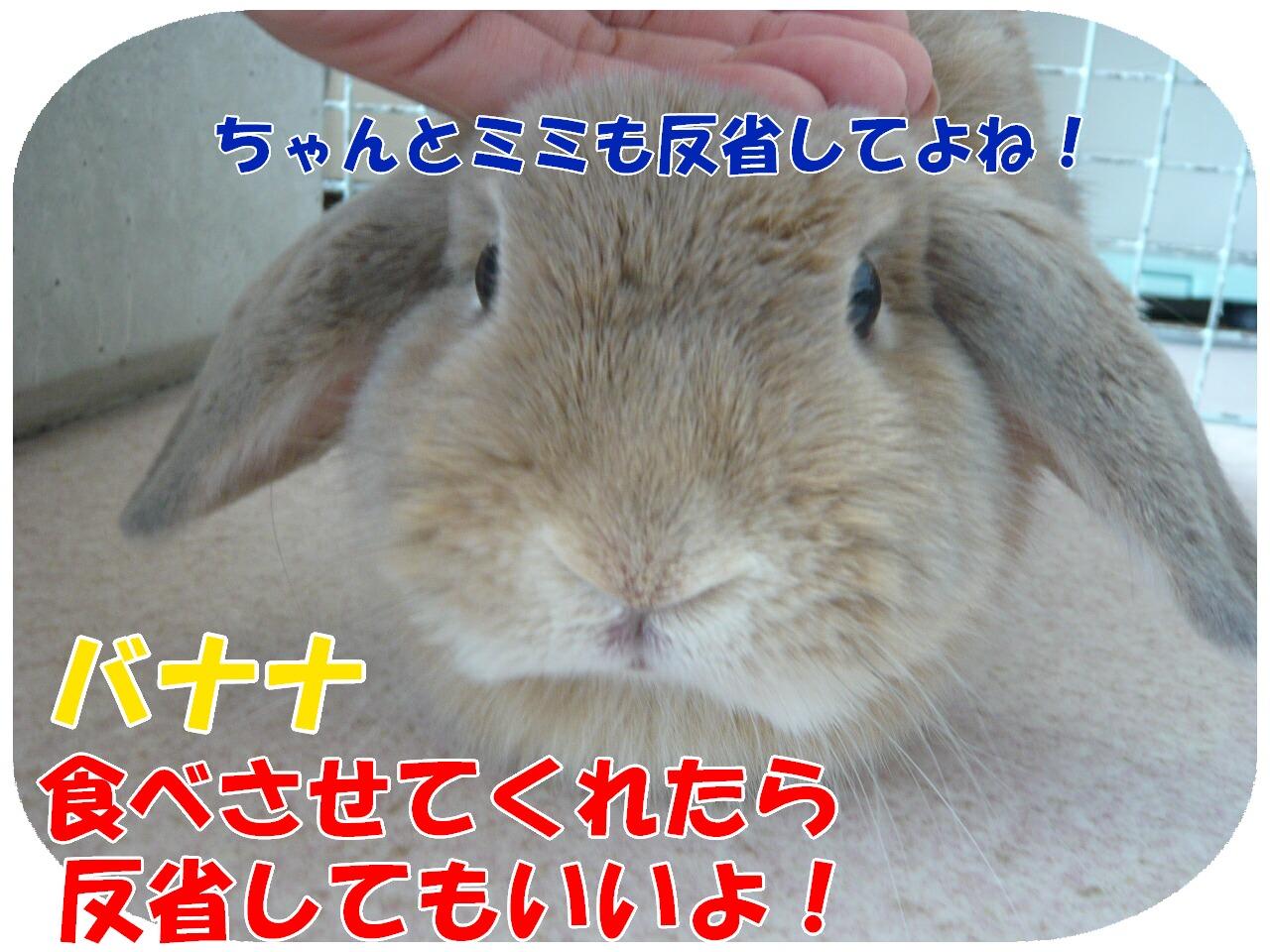 c0151439_1244731.jpg
