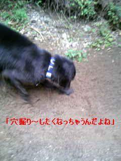 b0148945_22561863.jpg