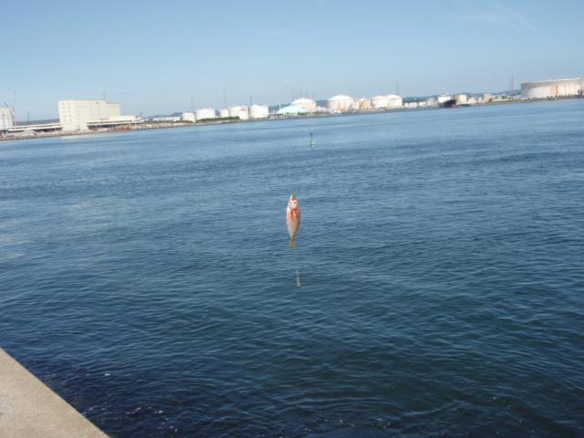 釣り_e0081753_3534521.jpg