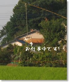c0006757_1521740.jpg