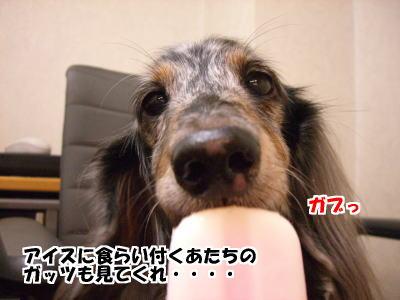 d0020869_16351232.jpg