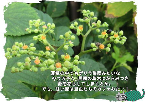 f0137096_19583446.jpg