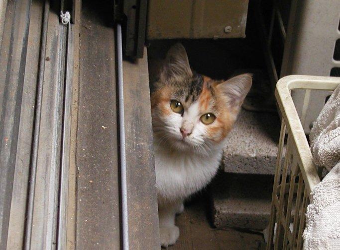 ある猫のお話_e0094102_13272353.jpg