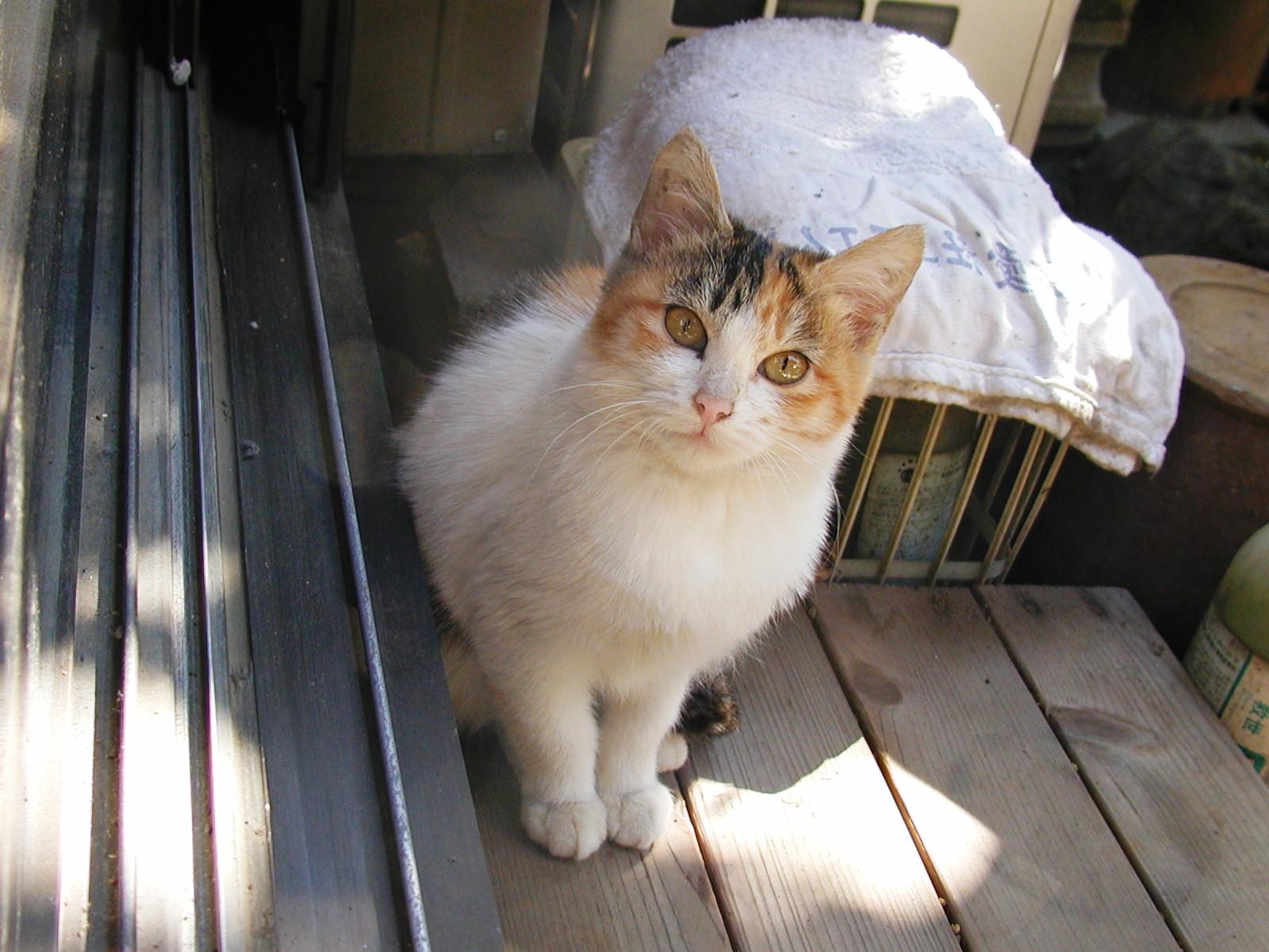 ある猫のお話_e0094102_13275920.jpg