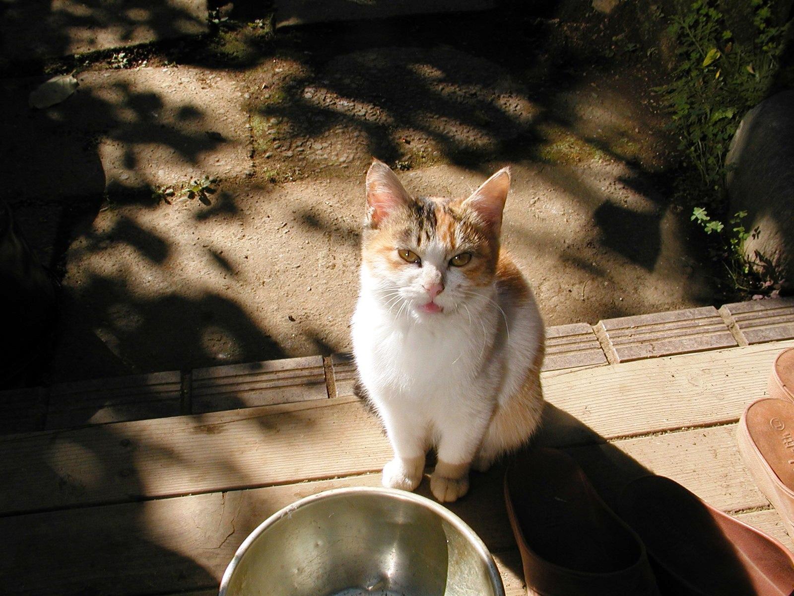 ある猫のお話_e0094102_13283253.jpg