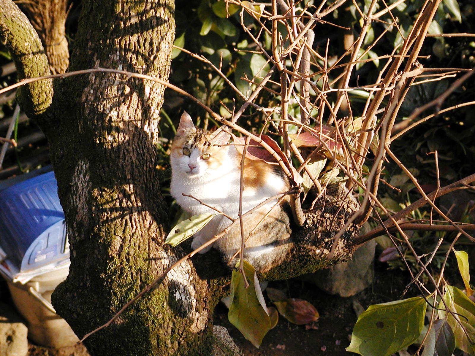 ある猫のお話_e0094102_13291843.jpg
