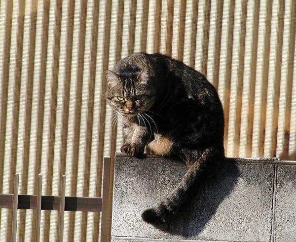 ある猫のお話_e0094102_13305188.jpg