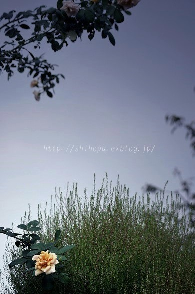 e0011137_20144178.jpg