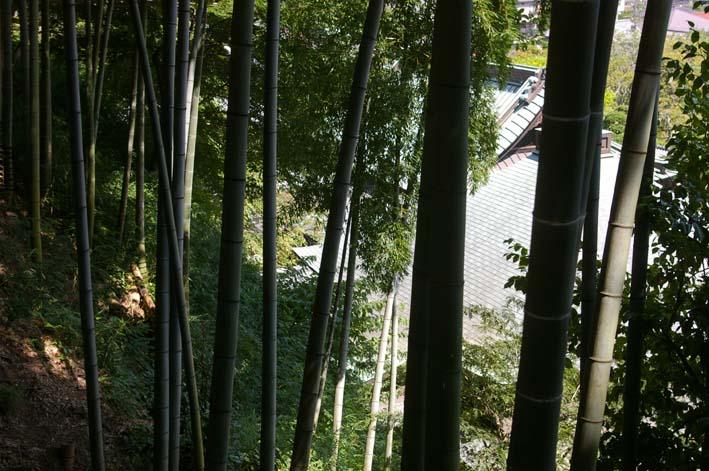 山に経済を戻す!「緑のダム北鎌倉」の取り組みをリポート_c0014967_1101851.jpg