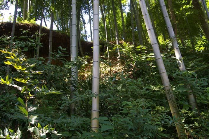 山に経済を戻す!「緑のダム北鎌倉」の取り組みをリポート_c0014967_195723.jpg