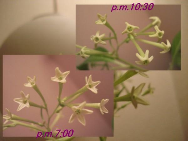 f0165677_18111657.jpg