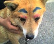 変な犬_a0005931_14294712.jpg