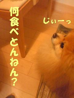 c0179136_2531725.jpg