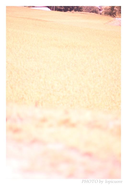 f0164442_05491.jpg