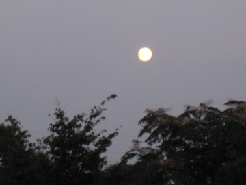 お月見!_d0102655_21414695.jpg