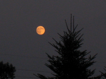 お月見!_d0102655_21423418.jpg