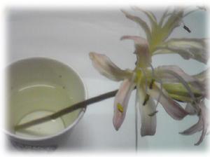 今年も秋の花シーズン_c0024018_17582997.jpg