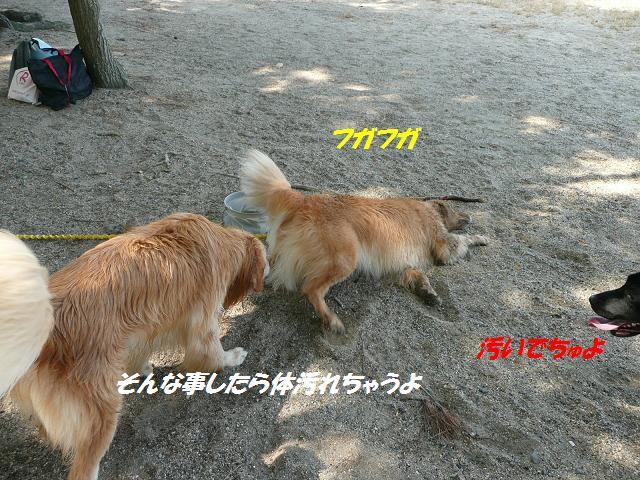 f0114128_9161969.jpg