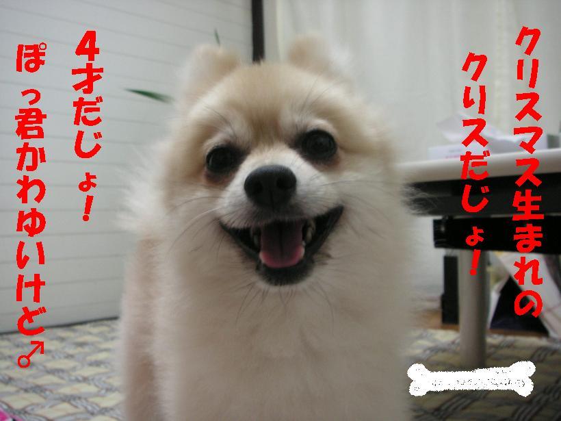 c0179136_1529193.jpg