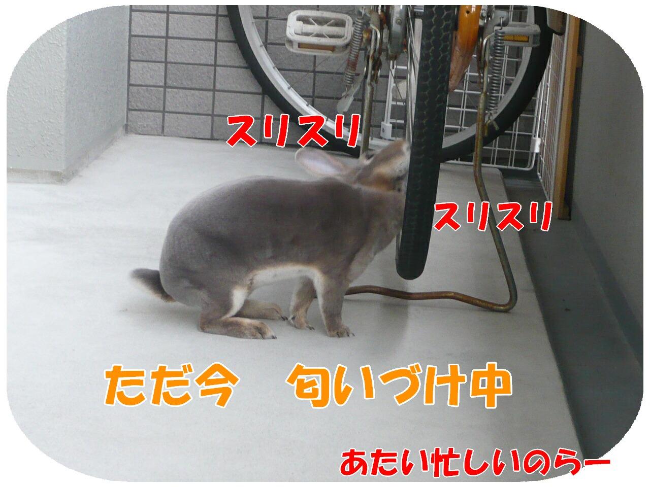c0151439_14341924.jpg