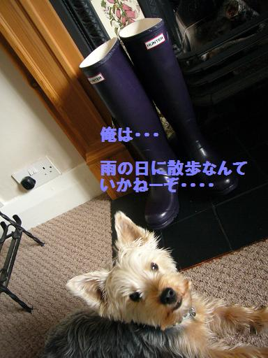 e0076052_624350.jpg