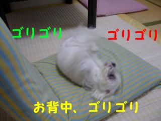 f0145192_17501592.jpg
