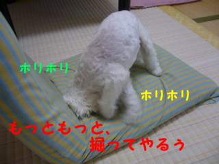 f0145192_17503493.jpg