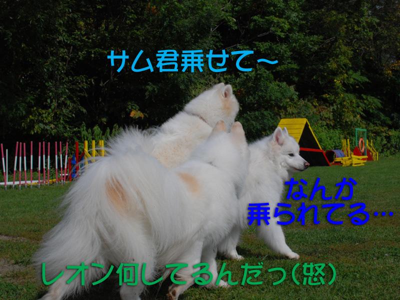 b0146024_1636753.jpg