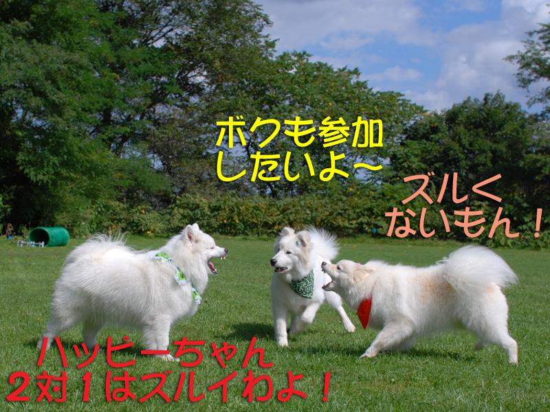b0146024_1653364.jpg