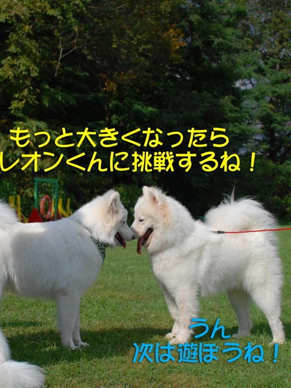 b0146024_18183979.jpg