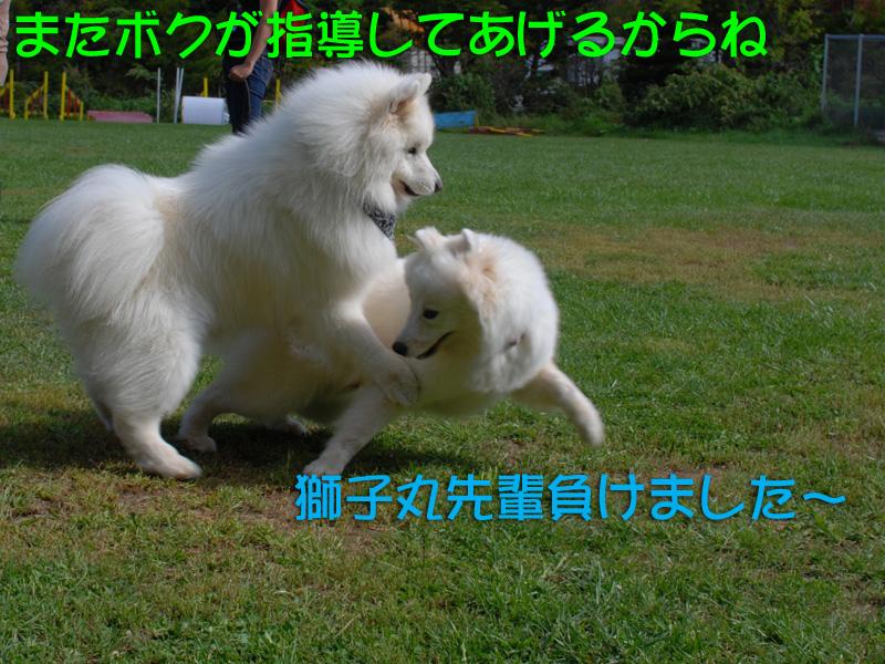 b0146024_18213470.jpg