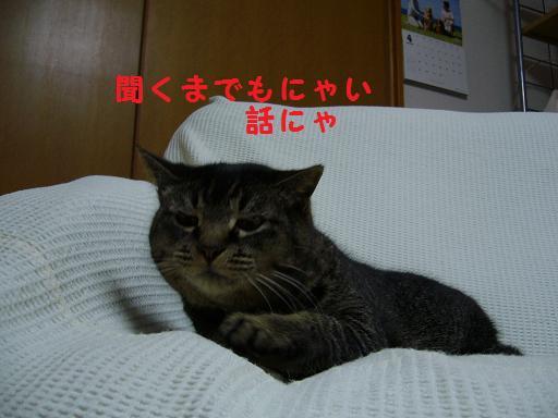 b0138430_20344466.jpg