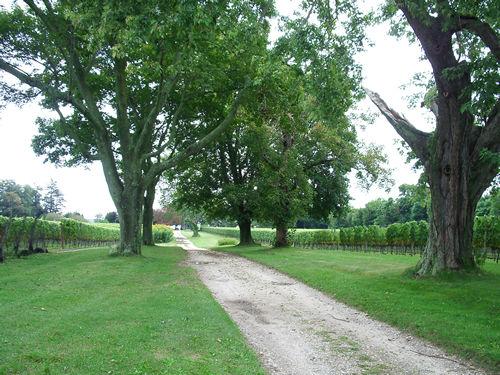 The Old Field Vineyards_c0064534_1465290.jpg