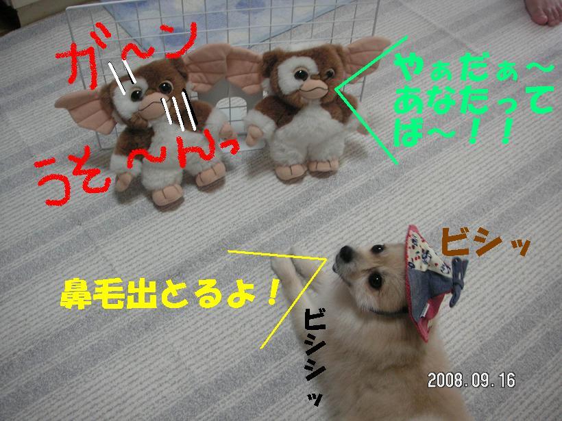 c0179136_13591848.jpg